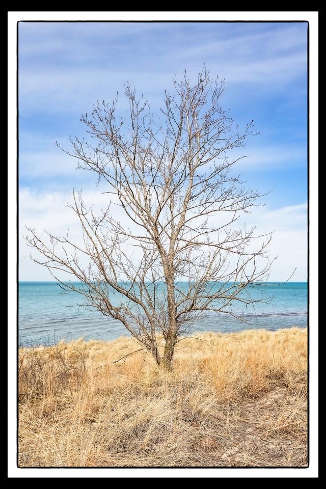 Lone Tree PR sm