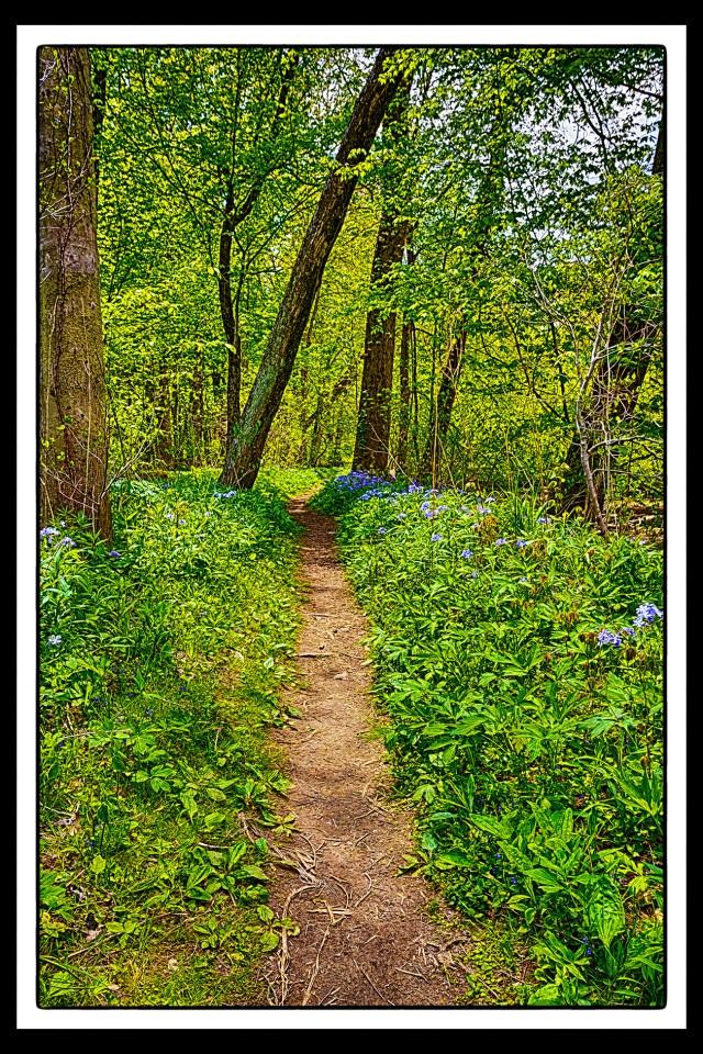Trail in Early June PR sm