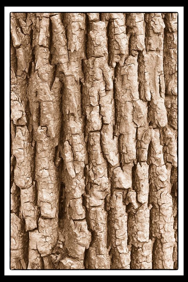 Craggy Tree Trunk PR sm