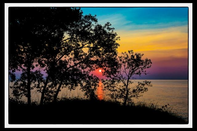 Summer Sunset Through Beach Trees PR sm art